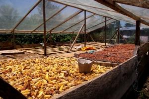 Marquesina para secado de Cacao y maiz
